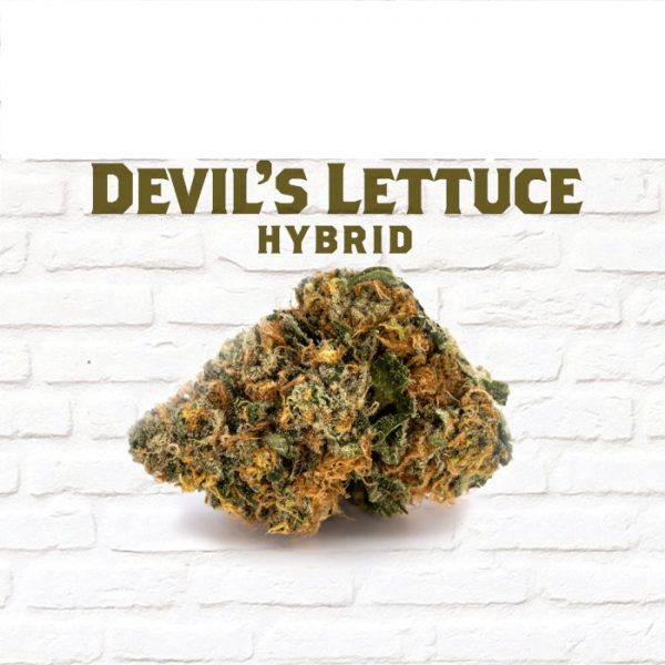 Devil's Lettuce Strain